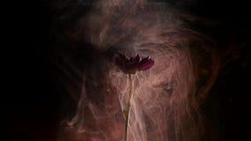 Margarita y pintura rojas en agua Tinta abstracta en agua almacen de video