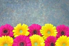 Margaritas Foto de archivo
