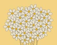 Margaritas Foto de archivo libre de regalías