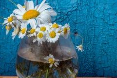 Margaritas Fotos de archivo