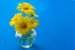 Margaritas amarillas en un pequeño florero en un fondo azul foto de archivo
