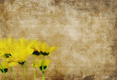 Margaritas amarillas Textured Foto de archivo libre de regalías