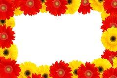 Margaritas amarillas y rojas imagenes de archivo