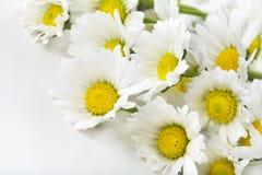 Margaritas blancas Imagen de archivo libre de regalías