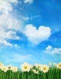 Margaritas blancas con las nubes hinchadas en fondo Imagenes de archivo