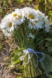 Margaritas blancas en el campo Foto de archivo