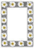 Margaritas blancas en marco de la foto de la arpillera Fotos de archivo libres de regalías