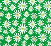 Margaritas blancas en modelo inconsútil del vector del fondo verde Fotografía de archivo