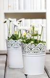 Margaritas blancas frescas en biblioteca Imágenes de archivo libres de regalías