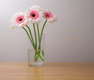 Margaritas blancas y rosadas del gerber en florero Imagenes de archivo