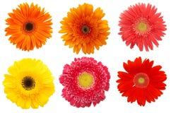 Margaritas coloridas foto de archivo