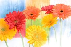 Margaritas coloridas en fondo coloreado Fotos de archivo libres de regalías