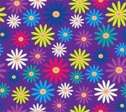 Margaritas coloridas en modelo inconsútil del vector del fondo púrpura Foto de archivo libre de regalías