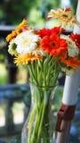 Margaritas coloridas en un florero fotografía de archivo libre de regalías