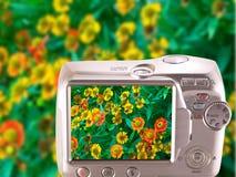 Margaritas de la imagen en la pantalla la cámara. Foto de archivo libre de regalías