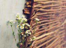 Margaritas del campo en el fondo de mimbre de la cerca Imagenes de archivo