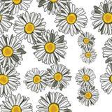Margaritas del estampado de flores Fotos de archivo libres de regalías