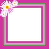 Margaritas del marco de la foto Fotos de archivo libres de regalías
