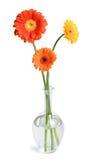 Margaritas en florero Fotografía de archivo
