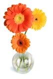 Margaritas en florero Imagen de archivo