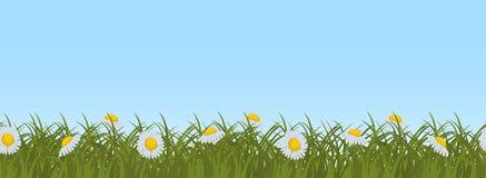 Margaritas en hierba verde en un fondo del cielo azul Frontera inconsútil ilustración del vector