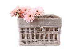 Margaritas en la cesta, aislada Imágenes de archivo libres de regalías