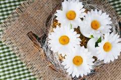 Margaritas en los huevos - composición de Pascua Imagenes de archivo