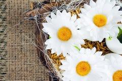 Margaritas en los huevos - composición de Pascua Imágenes de archivo libres de regalías