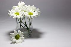 Margaritas en un florero claro fotos de archivo libres de regalías