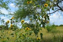 Margaritas overgrown Foto de archivo