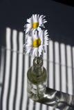 Margaritas por una ventana con las persianas Imagen de archivo libre de regalías