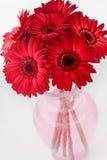 Margaritas rojas fotografía de archivo