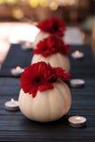 Margaritas rojas del gerbera en las calabazas blancas talladas de Casper Fotos de archivo libres de regalías