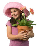 Margaritas rosadas de la chica joven foto de archivo