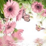 Margaritas y mariposa del Gerbera imagenes de archivo