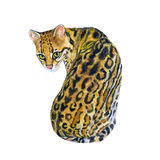margay Leopardus wiedii水彩画象与小点,在白色背景的条纹的 手拉的甜家庭宠物 Brigh 免版税库存照片