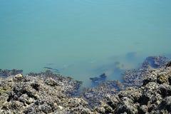 Marge de rivière avec des poissons Image libre de droits