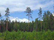 Margem de uma madeira Imagem de Stock