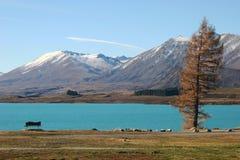 Margem espetacular, único pinho amarelo, banco vazio na pastagem, lago ciano profundo da água e montanhas distantes da neve no ou imagens de stock