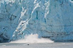 Margerie Glacier calving Royalty Free Stock Photos