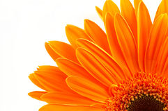 Margherita arancione fotografia stock