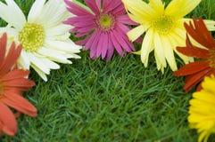Margherita - bordo del fiore della sorgente Fotografie Stock