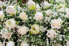 Margherita e rosa di bianco Fotografie Stock