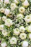 Margherita e rosa di bianco Fotografia Stock Libera da Diritti