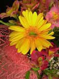 Margherita gialla della gerbera Fotografia Stock