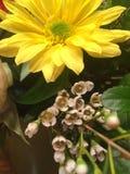 Margherita gialla in un mazzo immagini stock libere da diritti