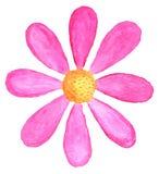 Margherita rosa in acquerello Fotografie Stock
