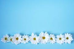 Margherite bianche su fondo blu-chiaro Immagini Stock Libere da Diritti