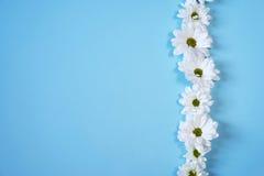 Margherite bianche su fondo blu-chiaro Fotografia Stock