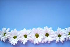 Margherite bianche su fondo blu-chiaro Fotografia Stock Libera da Diritti